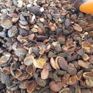 Argan Walnut shells for smoking BBQ and wood stove